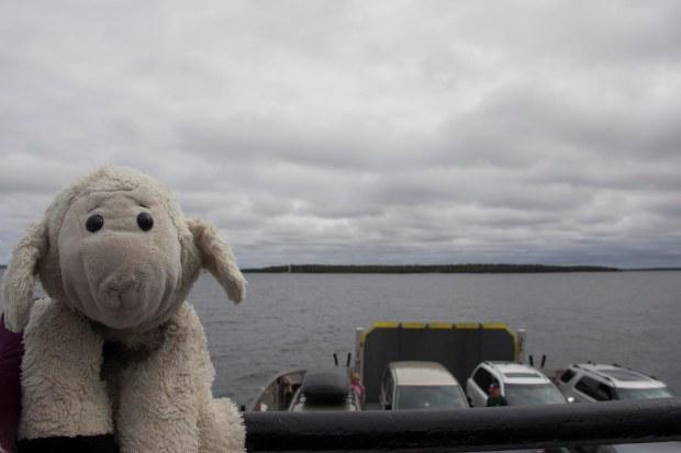 Sheep and the Washington Island Ferry
