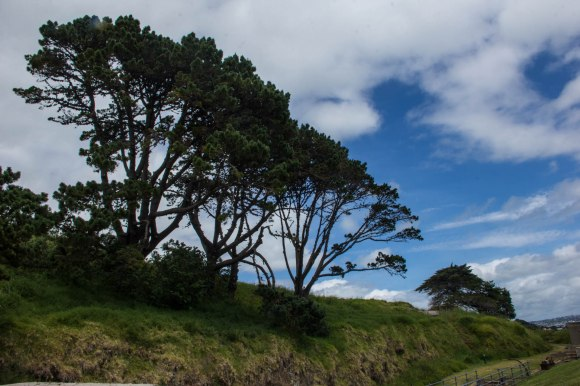north head auckland new zealand trees and nature