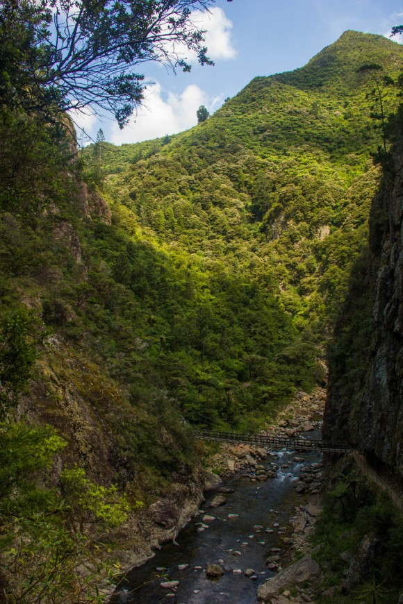 windows walk karangahake gorge new zealand