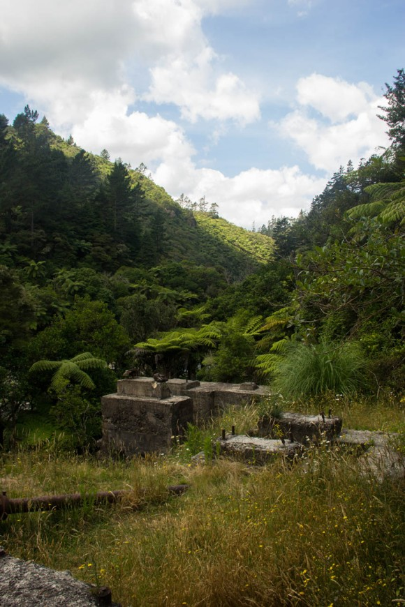 karangahake gorge new zealand